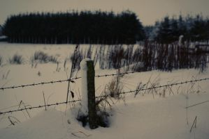 Wind In Lonely Fences by SubKultur3