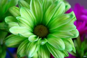 Birthday Flowers 9 by LifeThroughALens84