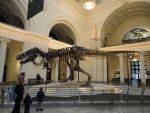 Sue The TRex Field Museum by green-eyed-tiger