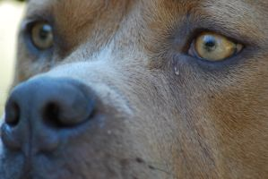 Dog Face Close-Up 3 by xxtgxxstock