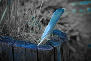 blue feather. by distandi