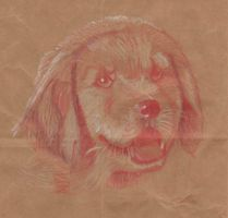 Pet Portrait: Golden Retriever Puppy by SeraphSisters