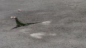 Large Green Lizard by Madam--Kitty