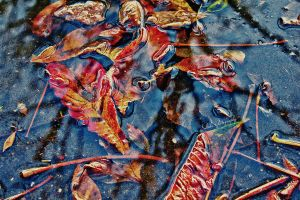 Autumn Reflections by Subida