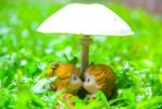Love under a mushroom...150914 by Lizzistudios