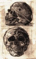 Human skull - sketches by Drimr