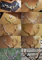 making of antlers by Jolien-Rosanne