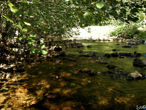 River Under The Trees by Babbling-Bubbles