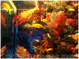 Aquarium with warm colors by DihtagZ