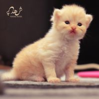baby cat Jerry woow 0703 by shosheta