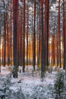 Burning  Forest 2 by CitizenFresh