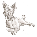 Basenji-4B pencil by Kitchiki