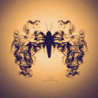Moth by HYDRA-Artwork