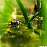 I see you by Photographia-Paulo