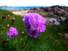 Thrift On The Shore by Temujinsword