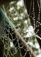 Spider's Tears by Kilica