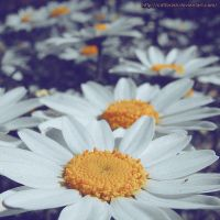 Daisy chain by Cattereia