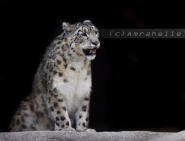 Snow leopard by Amrahelle