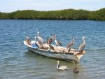 """""""Pelicans on a Boat"""" by Sister-of-the-Moon"""