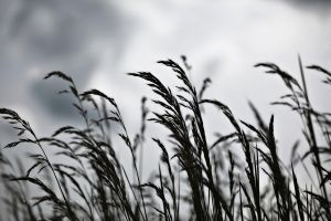 Grass in the Wind by andras120