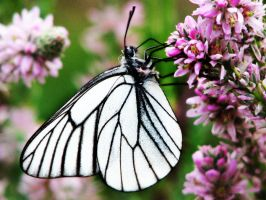 Snow White by Panda-kiddie