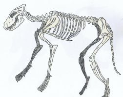 Wolf Skeleton by Up-Your-Arsenal-N90