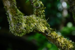 Moss by Ellie-S