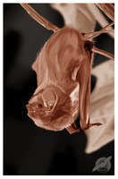 Eastern Red Bat by shorty-antics-27