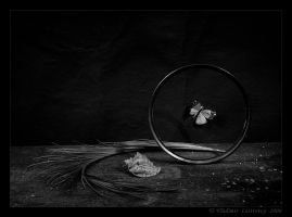Life by Lestrovoy