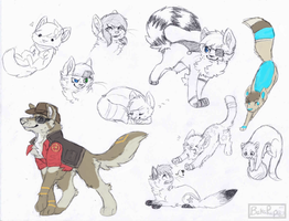 CO:so many catsss by BakaPup