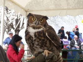 Great Horned 1 by Owlheart