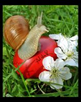 Easter snail by ad-shor