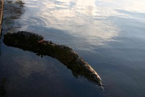 Ripples In Water by nwalter
