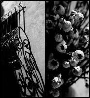 Dying shadows by Malleni
