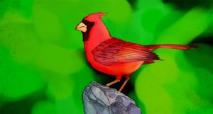 Cardinal by Numberslayer