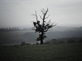 Horse Mans Tree by LW-M-E-D-I-A