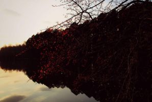 Autumn Reds by Dark-and-Dreamless
