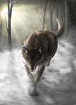 Wolf and Snow by dragonicwolf