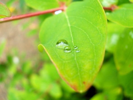 Raindrops on leaves 5 by Avelion-chan