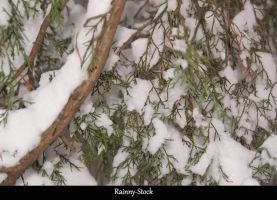 Snowytree- stock by Rainny-Stock