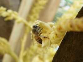 Bee in a palm tree by Abinzo