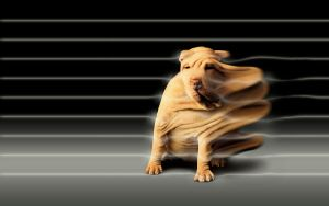 Dog in the wind tunnel by ForestManFx