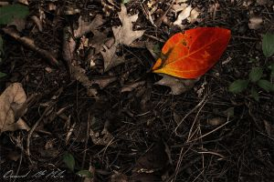 Colors of Autumn by EviL-iQ