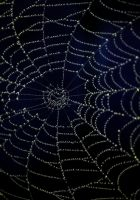 Midnight Web by Forestina-Fotos