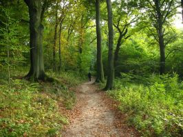 Forgotten Path 1508739 by StockProject1