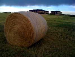 What The Hay by jkire