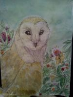 Barn owl by Edenfur