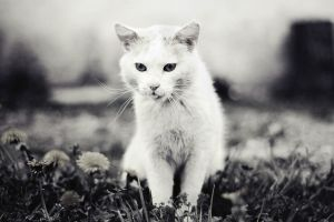 white kitty by lans-bejbe