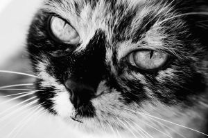 Soulful Eyes by Charmed-n-Captivated