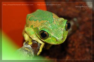 L vermiculatus number 6 by theperfectlestat